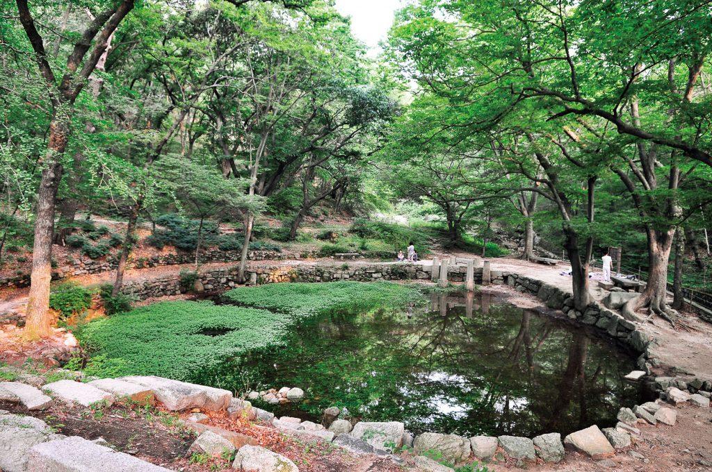 Rekreasi Alam Mandi di Hutan Korea Selatan
